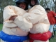 sumo-wrestling-095